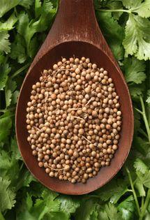Healthy herbs : Coriander