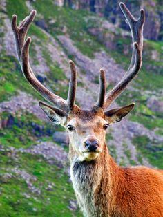 funkysafari:  Scotland Deerbypimpmasta ste