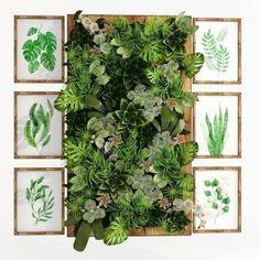 Greenwall Plant model, this model plant piece of Art, Textures low-poly model ready for Virtual, accurately design for perfect visualization Plant Wall, Plant Decor, Cinema 4d Render, Cloud Decoration, Low Poly 3d Models, 3d Visualization, Cool, Art Pieces, Texture