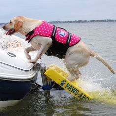 Paws Aboard Doggy Boat Ladder - Overton's