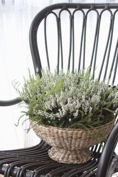 Fall Winter, Autumn, Scandinavian Home, Container Gardening, Gardens, Rustic, Chair, Decoration, Interior