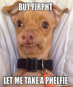 funny dog meme picture best humor website