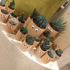 "3,558 Likes, 55 Comments - کاکتوسساکولنتcactussucculent (@amin_hajimohamadi) on Instagram: "" : @ninaemiles # #cactus #succulent #succulents #cacti #cacto #kaktus #кактус #多肉植物 #多肉 #サボテン…"""