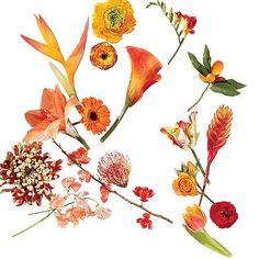 A Glossary Of Wedding Flowers By Color | Wedding Ideas | Brides.com
