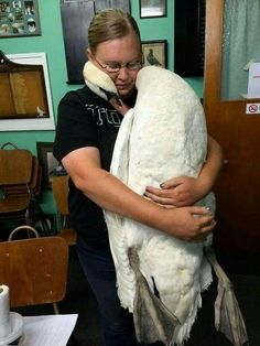 Swan embraces the vet who saved his life 💖