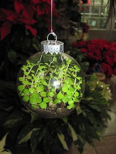 Living ornaments; have to try this