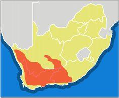 Sceletium toruosum plants are indigenous to South Africa.