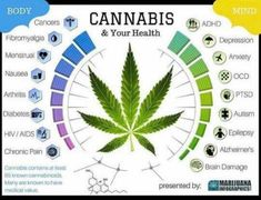 Cannabidiol (CBD) is one of over 80 chemical compounds found in the cannabis plant called cannabinoids. Cannabinoids bind to receptors in the brain and body and are responsible for the effects of c… Medical Cannabis, Cannabis Oil, Cannabis Edibles, Cannabis Growing, Oil Benefits, Health Benefits, Health Tips, Arthritis, Ptsd