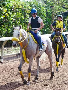 マイルチャンピオンシップ追い切り 8歳馬ながら活気十分のスノードラゴンが一発を狙う
