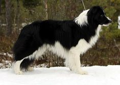 This is a gorgeous dog - the pattern is amazing.