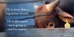 "He is more than a ""regulation breach"" #banliveexport"