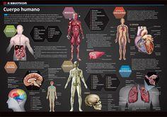 Medicina y salud.infografia mynorte.com