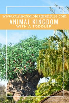 Our Incredible Adventures: Animal Kingdom With A Toddler