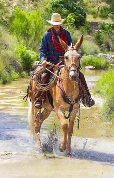 One lazy afternoon while splashing around Cazey Creek in the Texas Hill County, Miss Aleto and the Cowboy shared a bond few ever understand. Cowboy Horse, Cowboy Art, Cowboy And Cowgirl, Cowboy Pictures, Horse Pictures, Comic Kunst, Comic Art, Western Riding, Western Art