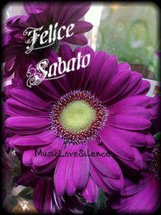 https://frasiimportanti.blogspot.it/2016/09/felice-sabatofrasi-buon-sabato.html