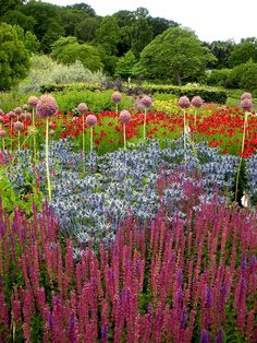 RHS Harlow Carr, Yorkshire  One of the main borders at the RHS garden at Harlow Carr, near  Harrogate.  The planting here, in the contemporary prairie style, is  impressive though I felt the garden as a whole disappointing by RHS  standards. By UltraPanavision