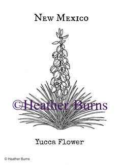 Realistic And Detailed Water Lily Flower Coloring Page For Adults