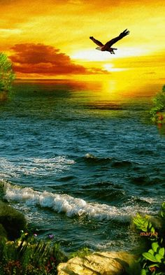 Beautiful colorful pictures and Gifs: Waterfall_Cascada-Animated-gif Beautiful Gif, Beautiful Sunset, Beautiful World, Beautiful Places, Colorful Pictures, Pretty Pictures, Gif Bonito, Gif Pictures, Belle Photo