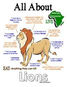 My All About Lions Book / Workbook - African Animal Unit Study - İnteresting İnformation And Curiosities Zoo Animals, Animals For Kids, Wild Animals, Lions For Kids, Preschool Science, Preschool Themes, Preschool Learning, Kindergarten Classroom, Lion Book
