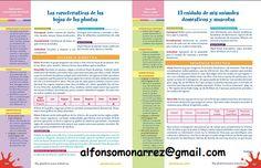 planeaci%C3%B3n+preescolar+situaciones+did%C3%A1cticas+apendizajes+esperados.png (508×328)