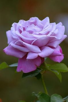 Valokuva > +Google-Roses