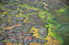 Arctic peatlands may release potent nitrous oxide greenhouse gas as permafrost thaws [from r/peatlands] Ozone Layer, Greenhouse Gases, Mother Earth, Compost, Climate Change, Arctic, Habitats, Science, Nerve Agent