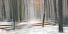 wood_9941 - Sabine Wild - Bilder, Fotografie, Foto Kunst online bei LUMAS