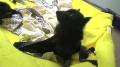 Some cute bat gifs - Imgur