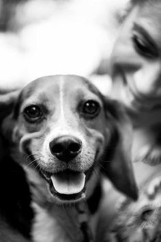 Bama the Beagle Beagle, Bethesda Row, Animal Welfare League, School Photographer, What A Beautiful Day, Like Image, Brown Dog, Autumn Photography, Dog Park