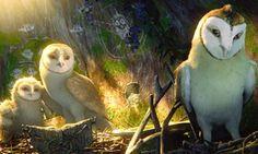 Baykuş Krallığı Efsanesi - Legend of the Guardians: The Owls of Ga Hoole izle Warrior Cats, Animal Logic, List Of Characters, The Ancient Magus Bride, Owl Family, Owl Art, Animation Film, Disney, Anime