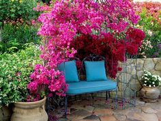 Checkout 19 best pergola plants for your garden. These climbing plants for pergolas and arbors can also be grown in small gardens easily.