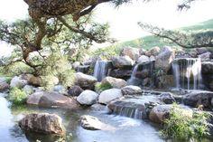 Thác nước, bon sai, hồ cá Koi được coi là điểm nhấn đặc biệt của khu vườn này