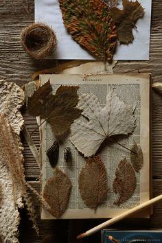 skeleton leaf press natural designs studio.jpg