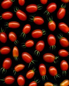 wasbella102:  Solanum lycopersicum by horticultural art