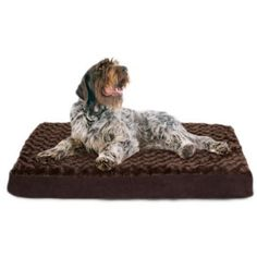 Big Dog Bed XXL Extra Large Washable Plush Orthopedic Jumbo Size Chocolate NEW