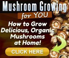 How To Grow Mushrooms From Scraps? – Slick Garden Growing Mushrooms At Home, How To Cook Mushrooms, Wild Mushrooms, Stuffed Mushrooms, Oyster Mushroom Recipe, Mushroom Soup Recipes, North Carolina, Poisonous Mushrooms, Bonsai Tree Care