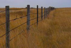 Barb wire fences