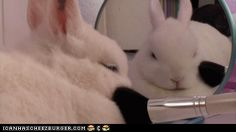 Silly hoomin, bunny does not need beautifying - July 7, 2012