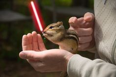 It's been a while since I've been on animalswithlightsabers.com Still funny