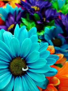 I love flowers that are all colorful like that :)