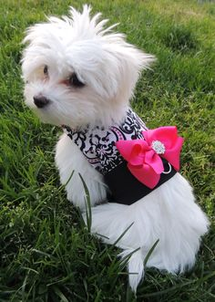 Couture Dog Harness In Black/White Damask With Hot Pink Bow ($48.00) .:BēLLäSFãSh!oN:.