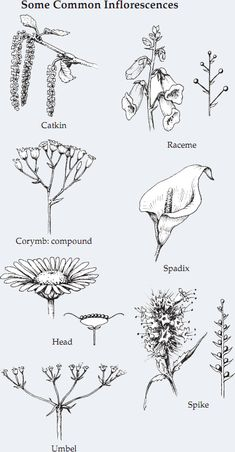 – Gardening Tips Botanical Drawings, Botanical Illustration, Botanical Prints, Plant Science, Science And Nature, Nature Journal, Journal Art, Flower Pot Design, Plant Identification