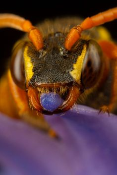 Amazing Insects!