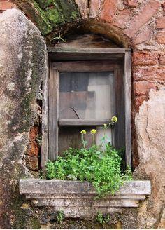 """nuretmen: """"""""Nature always finds a way"""" series Aydin, Turkey © Nur Uretmen """" Window View, Window Art, Window Boxes, Old Windows, Windows And Doors, Rustic Windows, Through The Window, Old Doors, Door Knockers"""