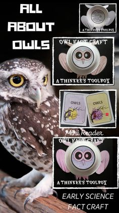 This is a great and creative way to help your students learn about owl facts. #halloween #science #fact #craft #activity #reader Spelling Words List, Grade Spelling, Teaching Materials, Teaching Ideas, Early Elementary Resources, Owl Facts, Halloween Science, Reading Comprehension Activities, Second Grade Teacher