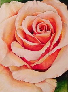 """""""Peaches and Cream"""" - watercolor painting of a rose by Alisha B Whitman"""