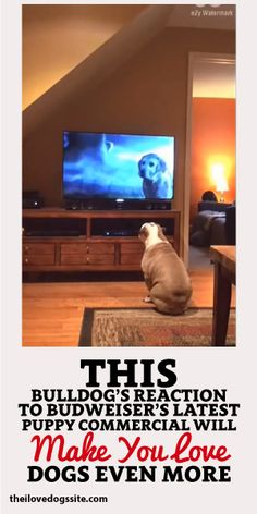 This Bulldog's Reaction To Budweiser's Latest Puppy Commercial Will Make You Love Dogs Even More! <3