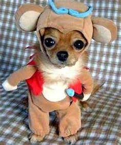 mini dog themed game