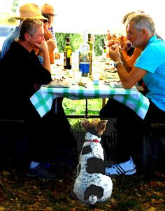 Hungry Dog: This Italian Terrier was sitting motionless at a picnic table at a rural Medieval Fair. He never moved a muscle as he watched the man eat his sausage, hoping a crumb would fall. I hope he got his just reward! #travel #italy #puppy