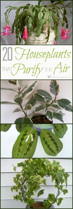 3272 best best air purifiers for dust images on pinterest air 20 easy houseplants that purify the air fandeluxe Choice Image